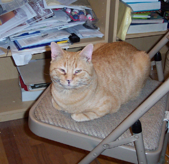 Cezar, cat, chair