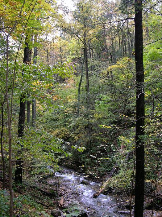 Delaware Water Gap Recreation Area, 051023-n8700, Fall, Colors