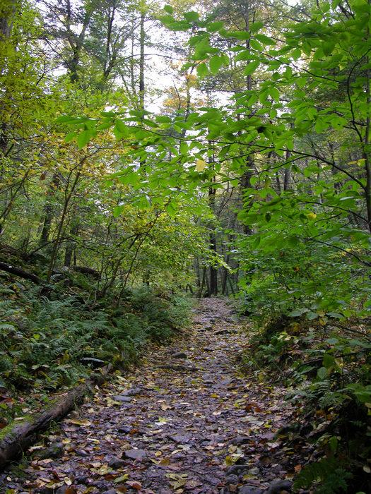 Delaware Water Gap Recreation Area, 051023-n8700, Trails, Paths, Boardwalks