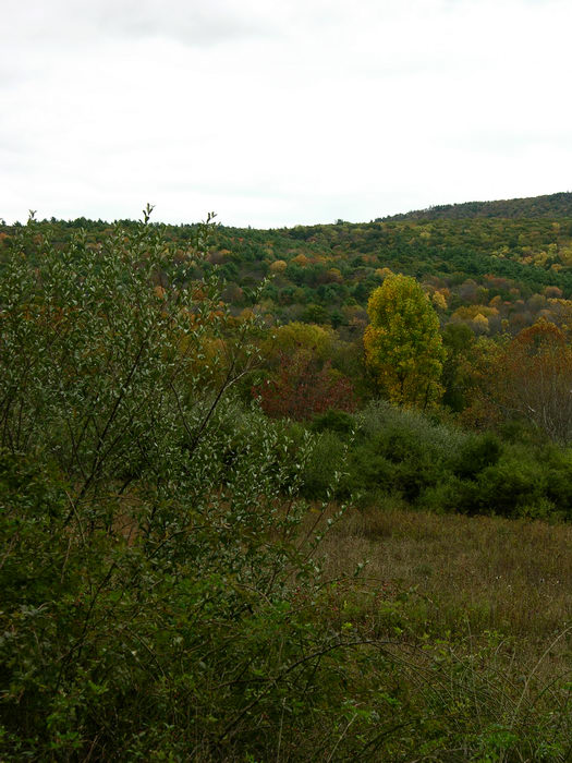 Delaware Water Gap Recreation Area, 051023-n8700