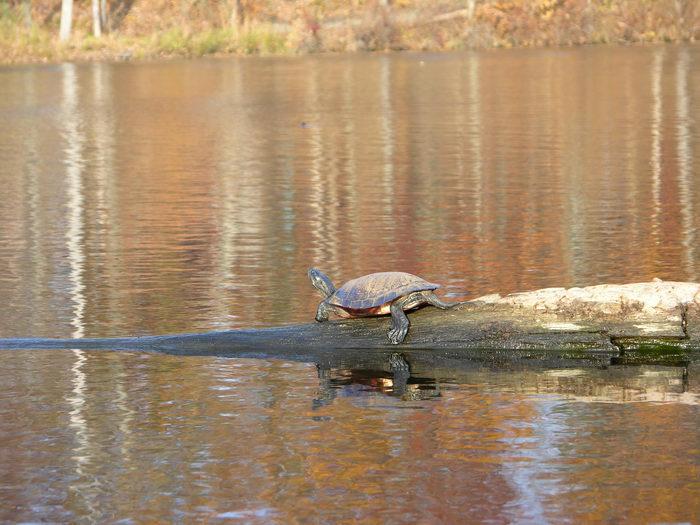 051106-n8700, Water, Ponds, Lakes, General, Prospertown Wildlife Managamenet Area (NJ)