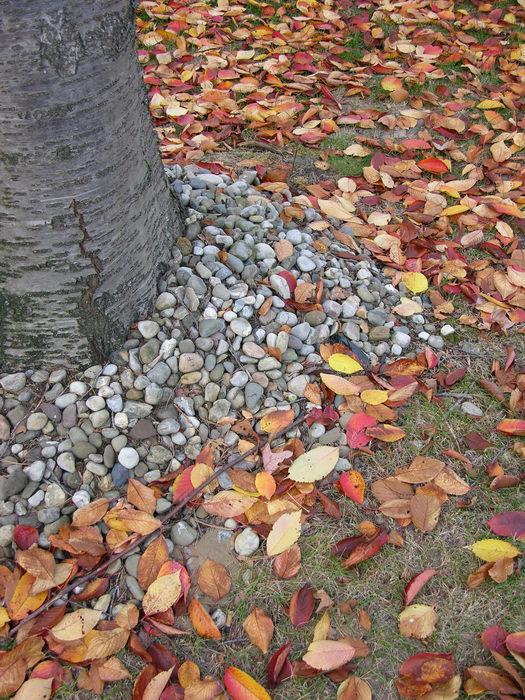051106-n8700, Prospertown Wildlife Managamenet Area (NJ), Fall, Colors