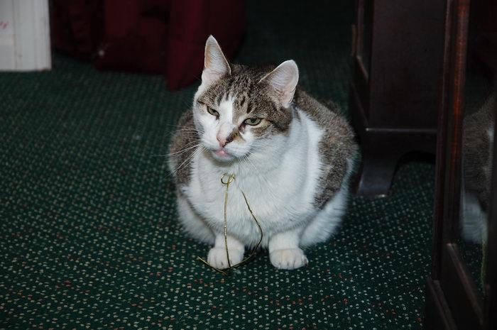 Cats, 0., Comet, Christines, Parents, House