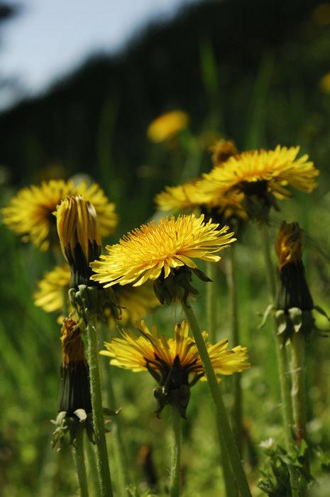 Paddling, hiking, Christine, Round, Valley, Flower, Favorites, ToPrint
