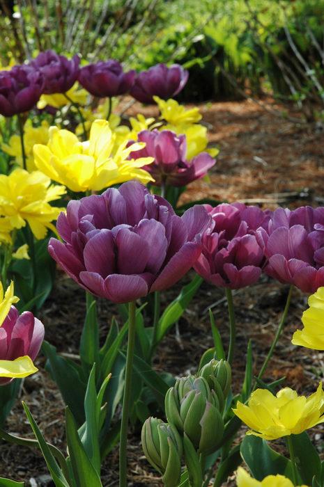 Deep, Cut, Gardens, !!, Flower, i, Enjoying, some, MCParks, CAL00198