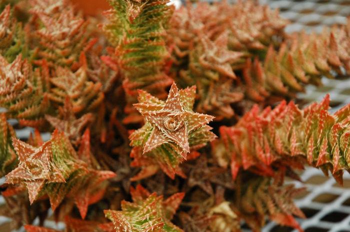 Deep, Cut, Gardens, !!, Favorites, Cacti, Enjoying, some, MCParks, CAL00198