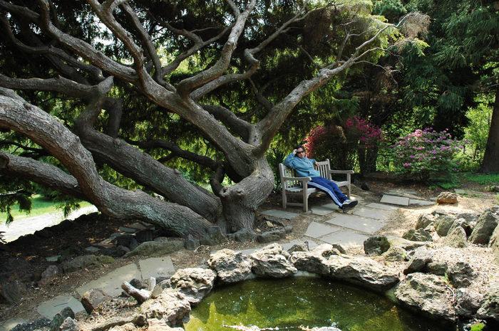 Deep, Cut, Gardens, !!, Trees, Leaves, Trails, Paths, Boardwalks, General, Enjoying, some, MCParks, CAL00198