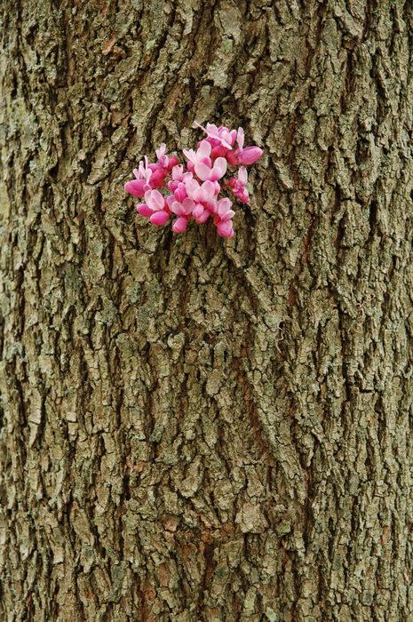 Deep, Cut, Gardens, !!, Flower, Trees, Leaves, Enjoying, some, MCParks, CAL00198