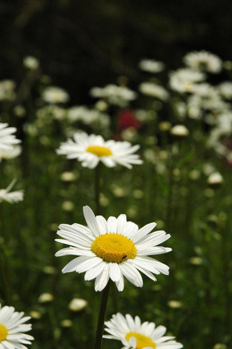Deep, Cut, Gardens, !!, Flower, Enjoying, some, MCParks, CAL00198