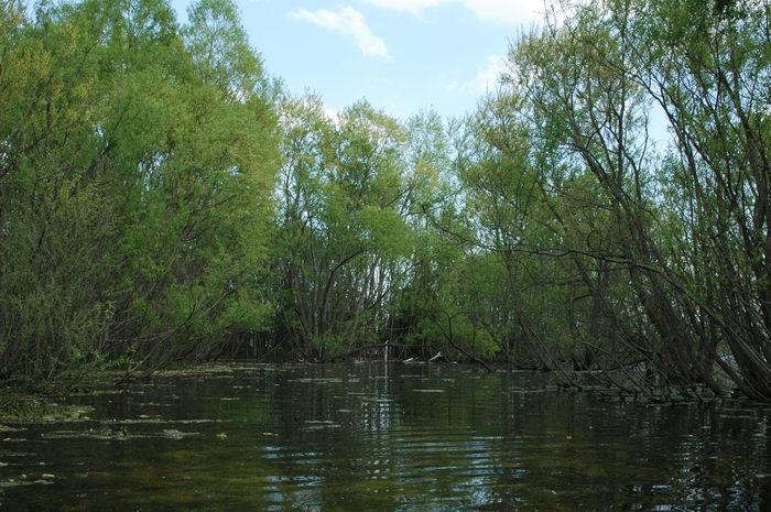 Manasquan, Reservoir, Marsh, Swamp, Enjoying, some, MCParks, CAL00198