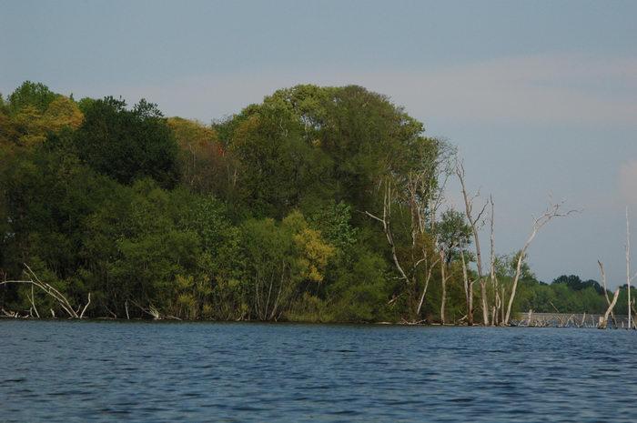 Manasquan, Reservoir, Water, Ponds, Lakes, General, Enjoying, some, MCParks, CAL00198
