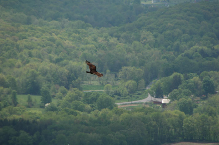 Birds, Sunrise, Mountain, scenic, overlook, (, NJ), Camping, with, Christine,