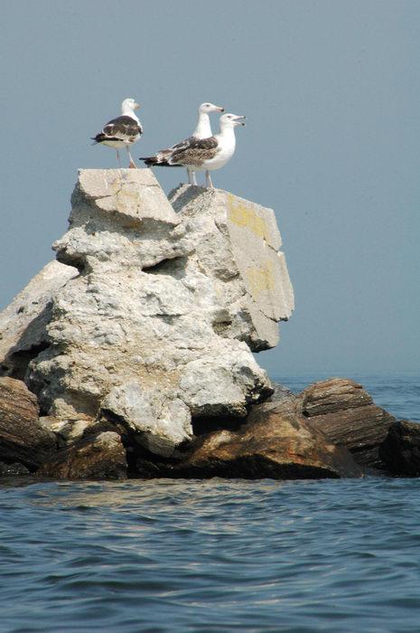 Birds, Water, Ponds, Lakes, General, Rocks, Rock, formations, Raritan, Bay