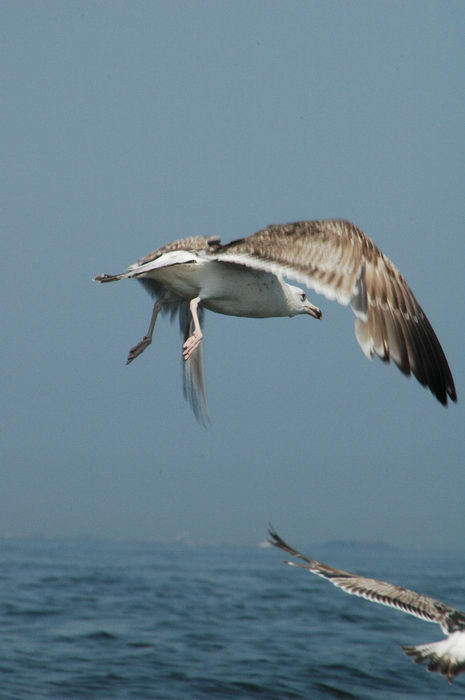 Birds, Raritan, Bay