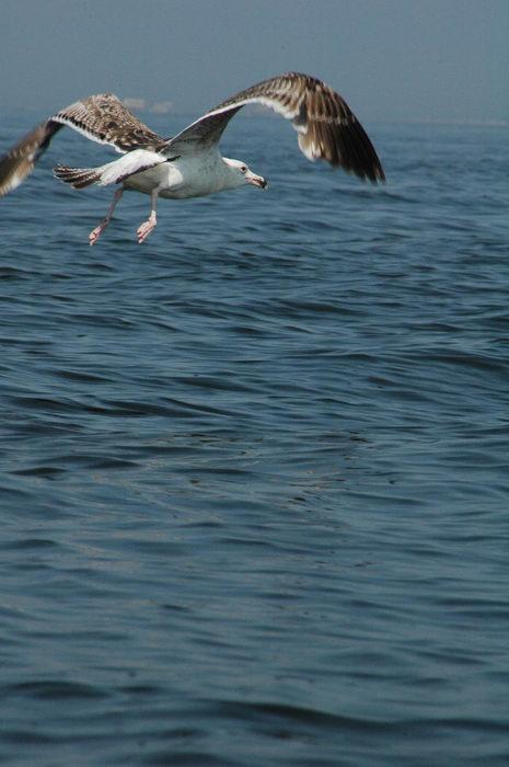 Birds, Water, Ponds, Lakes, General, Raritan, Bay
