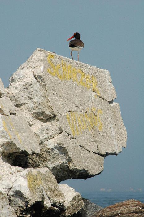 Birds, Rocks, Rock, formations, Raritan, Bay