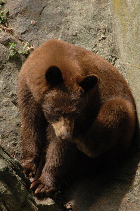 060708, A, trip, to, Bear, Mtn, and, the, Palisades, Zoo, Type, Animals, Mountain, State, Park
