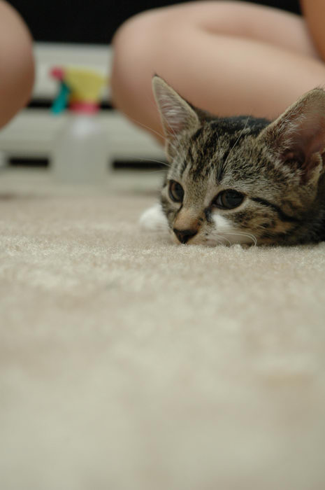 Cats, Babies, Her, Pets