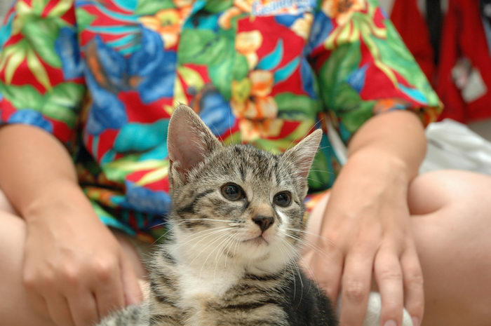 Cats, Babies, Favorites, Her, Pets