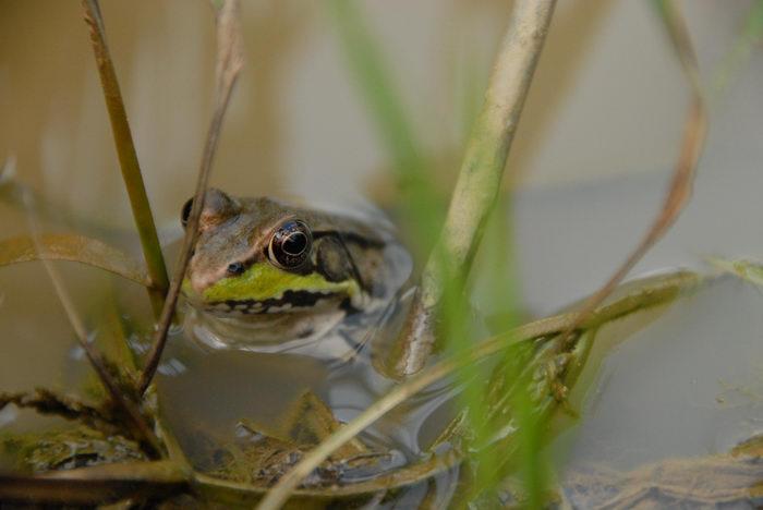 Assunpink, Reptiles, Wildlife, Mngt, Area, Marsh, Swamp, this, weekend,