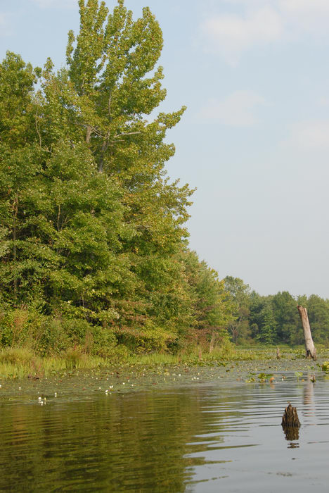 Assunpink Wildlife Management Area, Water, Ponds, Lakes, General, this, weekend,