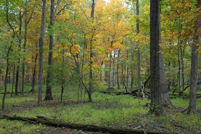 Woods, Forest, h_q, Fall, Colors, Washington, Crossing, (LOC00118, NJ, SP), A, walk, through, Washingtons,