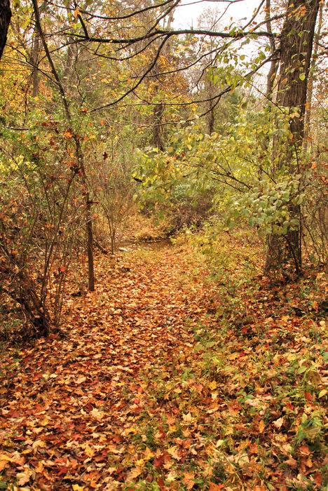 Trails, Paths, Boardwalks, Woods, Forest, h_q, Fall, Colors, Washington, Crossing, (LOC00118, NJ, SP), A, walk, through, Washingtons,