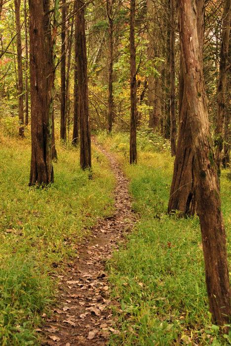 Trails, Paths, Boardwalks, Woods, Forest, h_q, Fall, Colors, Washington, Crossing, (LOC00118, NJ, SP), Favorites, A, walk, through, Washingtons,