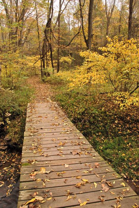 Bridges, Roads, Fall, Colors, Washington, Crossing, (LOC00118, NJ, SP), A, walk, through, Washingtons,
