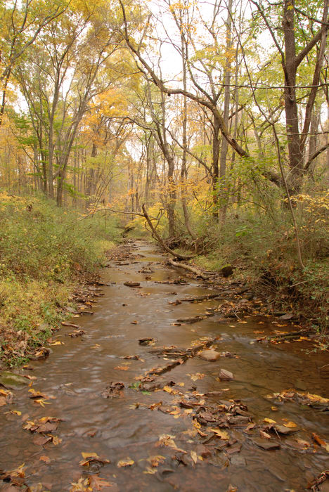 Water, Rivers, Streams, Fall, Colors, Washington, Crossing, (LOC00118, NJ, SP), A, walk, through, Washingtons,