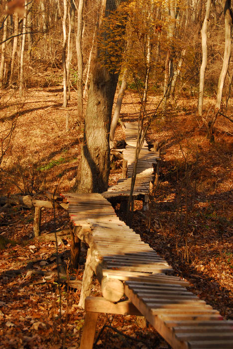 Trails, Paths, Boardwalks, Biking, Mountain, Allaire State Park (NJ), Woods, Forest, h_q, Hiking