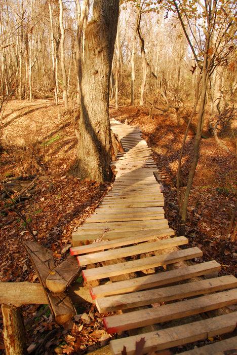 Trails, Paths, Boardwalks, Biking, Mountain, Allaire State Park (NJ), Woods, Forest, h_q, Hiking