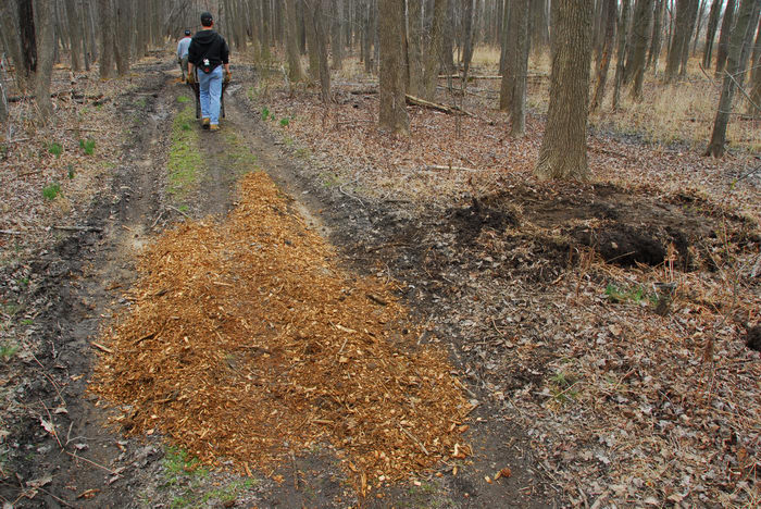 Mercer County Park (NJ), Trails, Paths, Boardwalks, Marsh, Swamp, Friends, Outdoors, General, Trail, Day, With, S.M.A.R.T., Maintenance