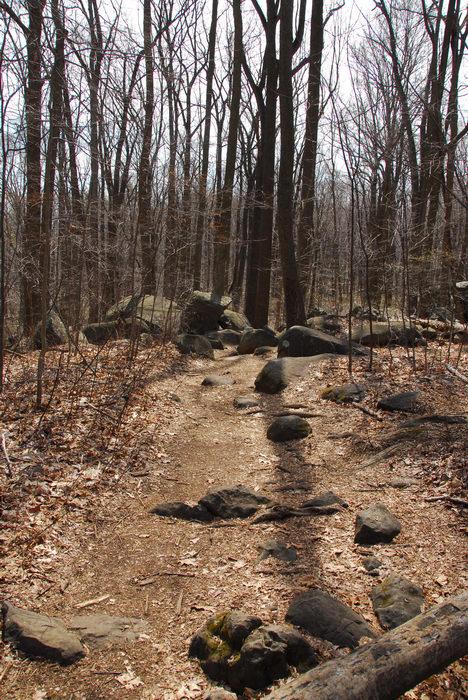 Trails, Paths, Boardwalks, Rocks, Rock, formations, Camping, in, Jim, Thorpe, PA, Ringing, Park, LOC00133