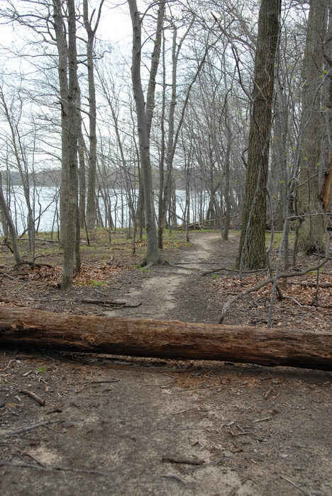 Mercer County Park (NJ), Trails, Paths, Boardwalks, SMARTs, April, Trail, Day