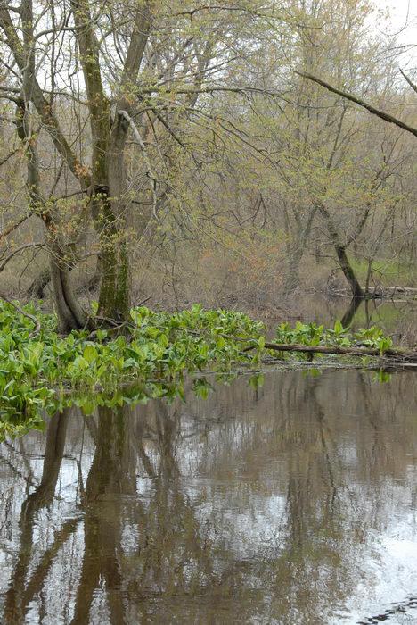 Mercer County Park (NJ), Marsh, Swamp, SMARTs, April, Trail, Day