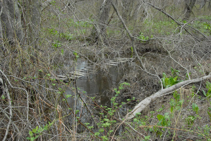 Mercer County Park (NJ), Marsh, Swamp, SMARTs, April, Trail, Day