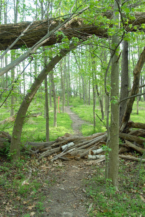 Mercer County Park (NJ), Trails, Paths, Boardwalks, Woods, Forest, h_q, Some, shots, from