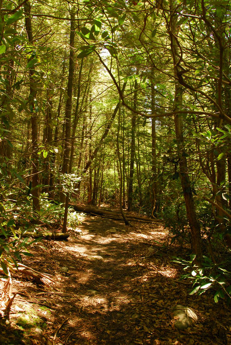 Wawayanda State Park, Biking, in, Waway, camping, at, High Point