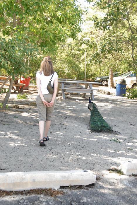 070623, No, tripods, at, the, Popcorn, Park, Zoo, Rebecca