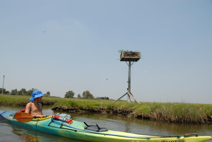 Birds, Kayaking, Paddling, Boating, Rob, Shedel, Sedge Islands (NJ), Friends, Outdoors, with, in, the