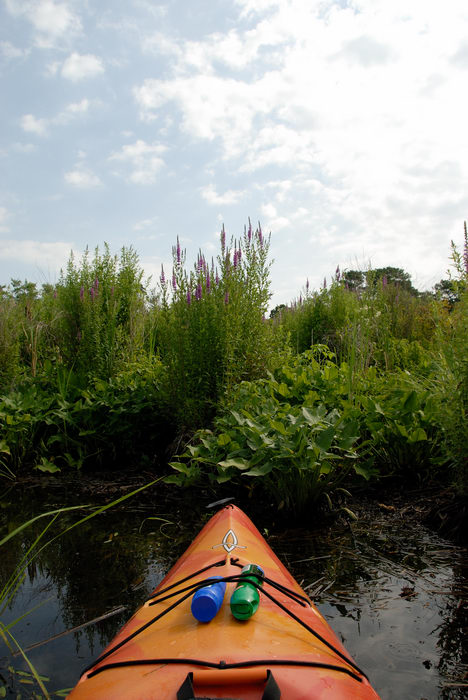 Kayaking, Paddling, Boating, Marsh, Swamp, Forge Pond (NJ), with, Rob, in