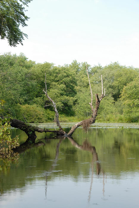 Water, Ponds, Lakes, General, Rivers, Streams, Woods, Forest, h_q, Reflections, Paddling, with, Rob, in, Forge Pond (NJ), Metedeconk, River, LOC00070