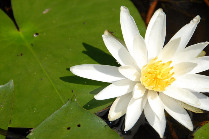 Flower, Paddling, with, Rob, in, Forge Pond (NJ), Metedeconk, River, LOC00070