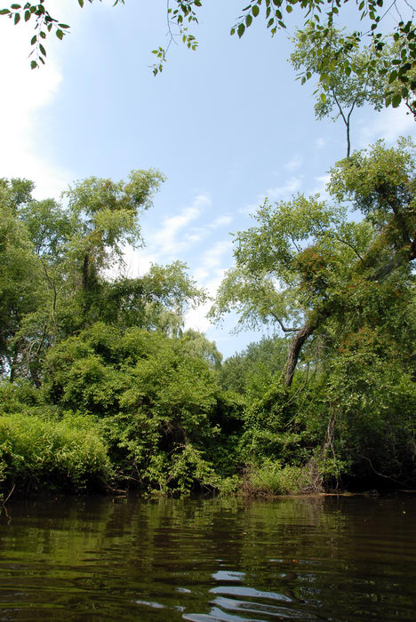 Water, Ponds, Lakes, General, Rivers, Streams, Woods, Forest, h_q, Paddling, with, Rob, in, Forge Pond (NJ), Metedeconk, River, LOC00070