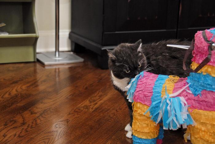 Cats, Ice, cream, party!, Martha's, Cat