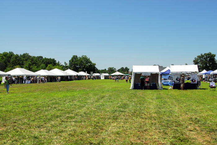festival, field, grass