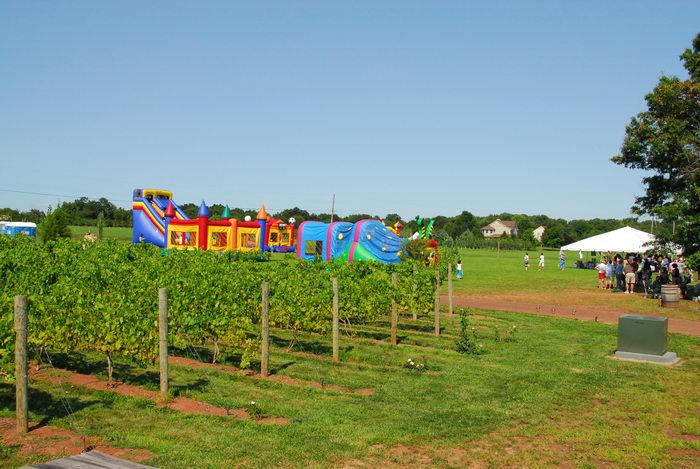festival, grape vine, vineyard