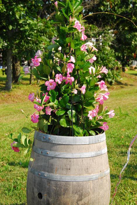 barrell, flower, flower pot