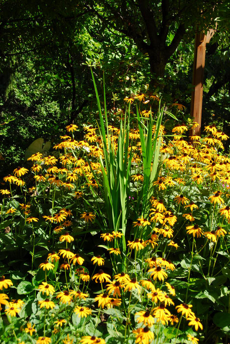 beautiful landscaping, flower, garden, yellow